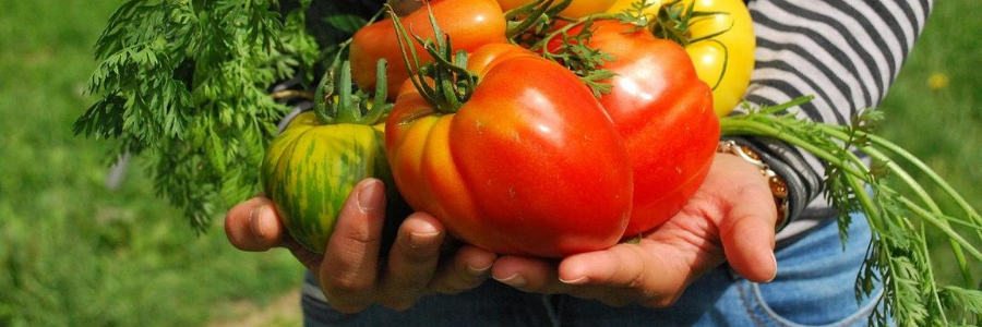cesta colgante, cesta frutas, cestas para verduras, verdulero cocina, canastos para verduras online, tienda de carritos verduleros